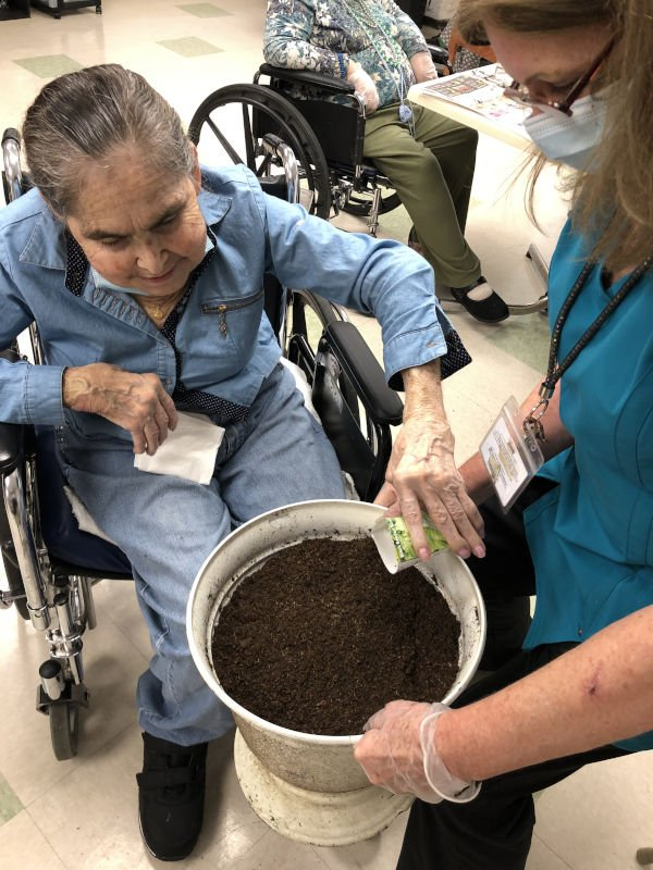Woman in wheelchair sprinkling seeds on dirt
